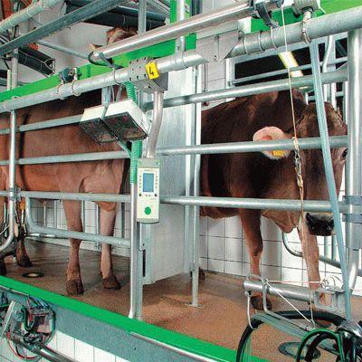 Оборудование для молочных ферм и комплексов, запасные части и сервисное обслуживание